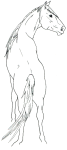 An outline of a horse