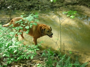 Rusty in the backyard