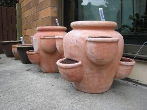 My pot garden (o;